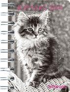 agenda 2014 kittens 8x13 cm-4002725763709