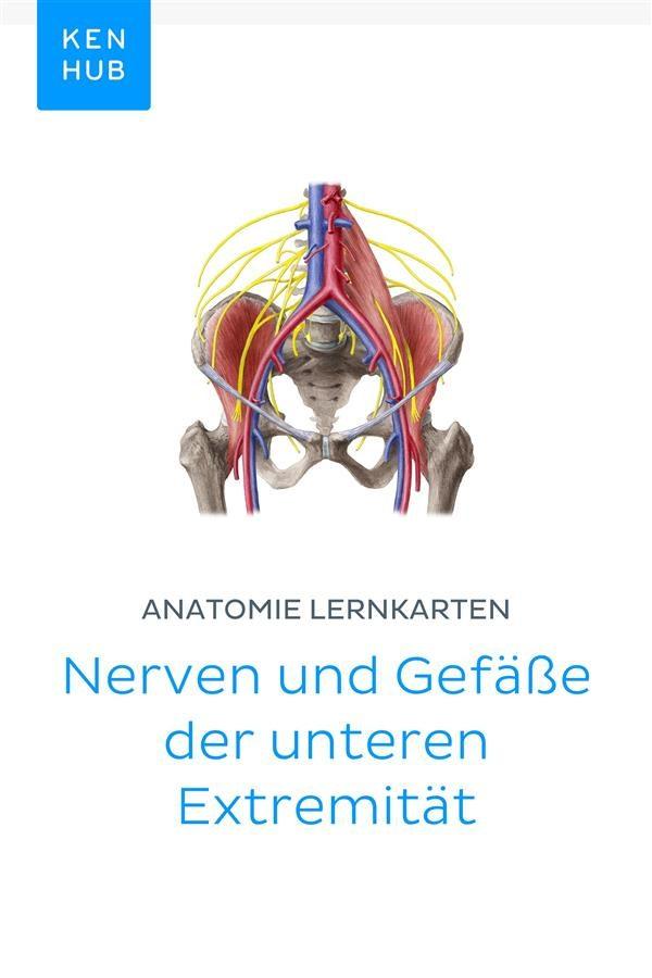 Beste Anatomie Der Unteren Extremitäten Venensystem Galerie ...