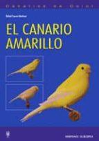 el canario amarillo (canarios de color)-rafael cuevas martinez-9788425516214